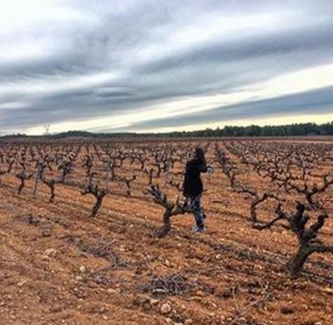wine-taste-viñas